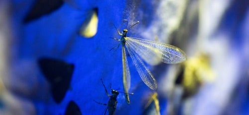 dragonflies on the sheet