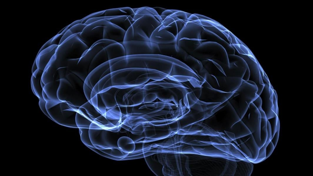 An illustration of a brain