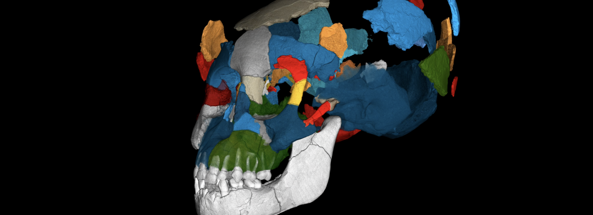 computer image of skull pieces fitting together
