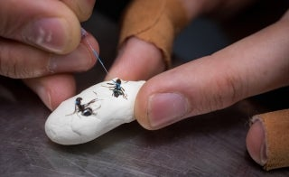 closeup of person painting ants