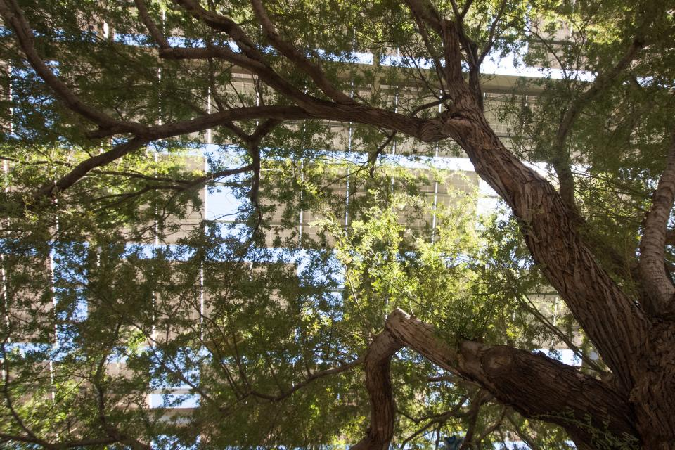 Tree and solar shade structure