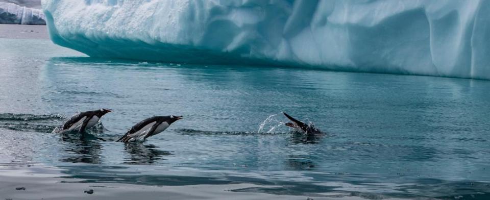 Flying penguins next to a glacier in Antarctica