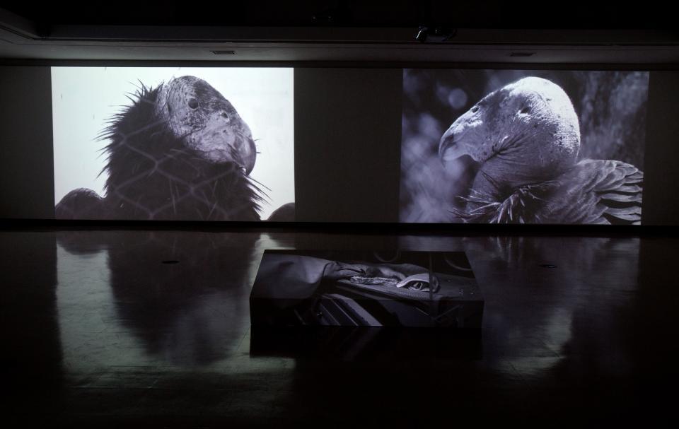 Kade Twist's video installation