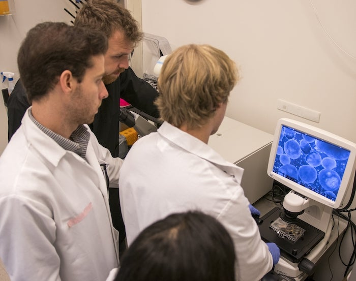 students looking at stem cells on a screen in a lab