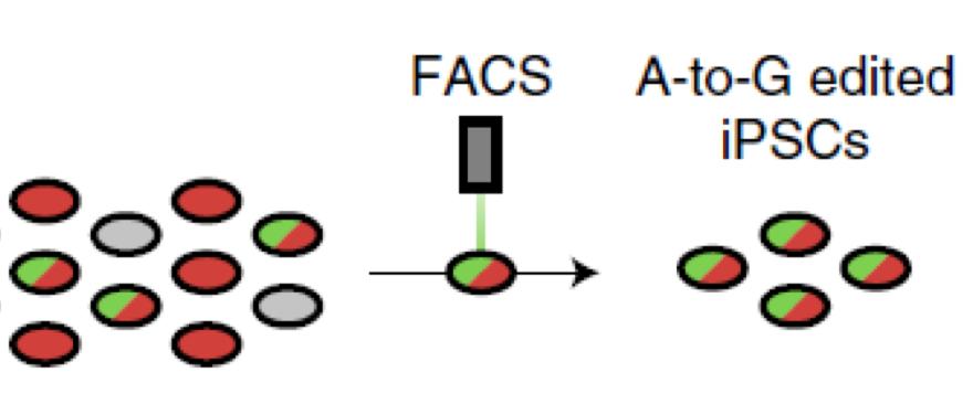 Screenshot of CRISPR process