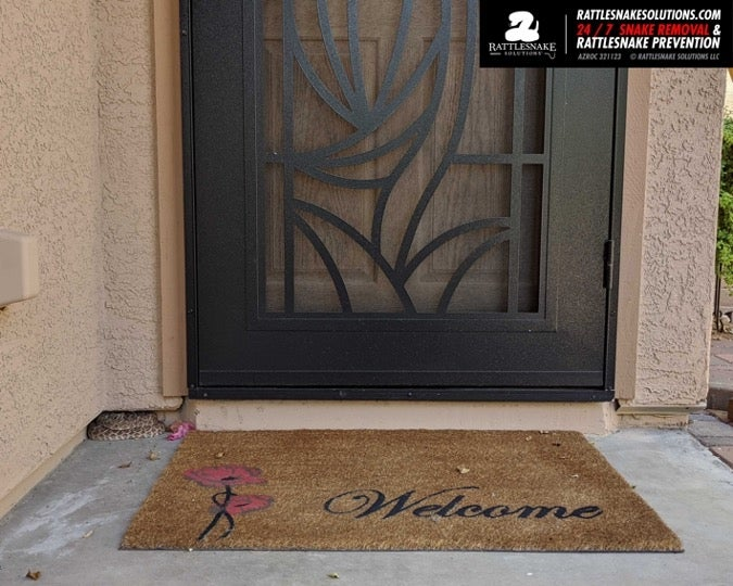 Rattlesnake on doorstep