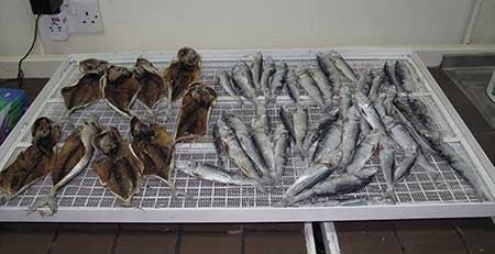 Seafood specimens from the Gulf of Oman