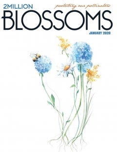 magazine cover for 2 Million Blossoms with illustration of flowers and bee on it